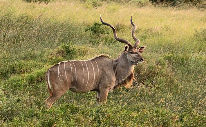 hm-pg-kudu
