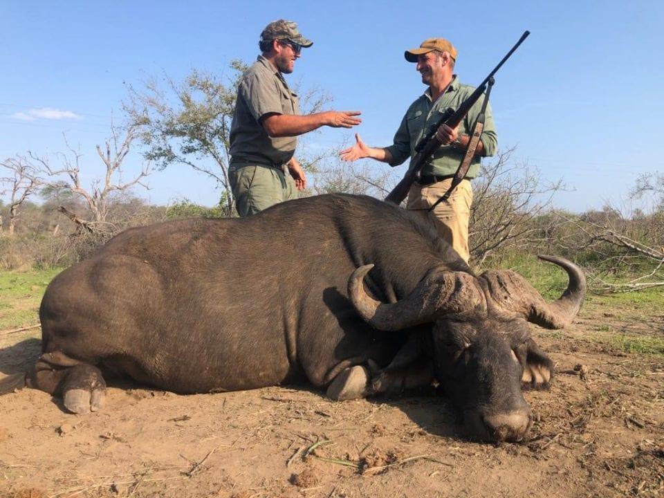 Buffalo Hunt in Balule
