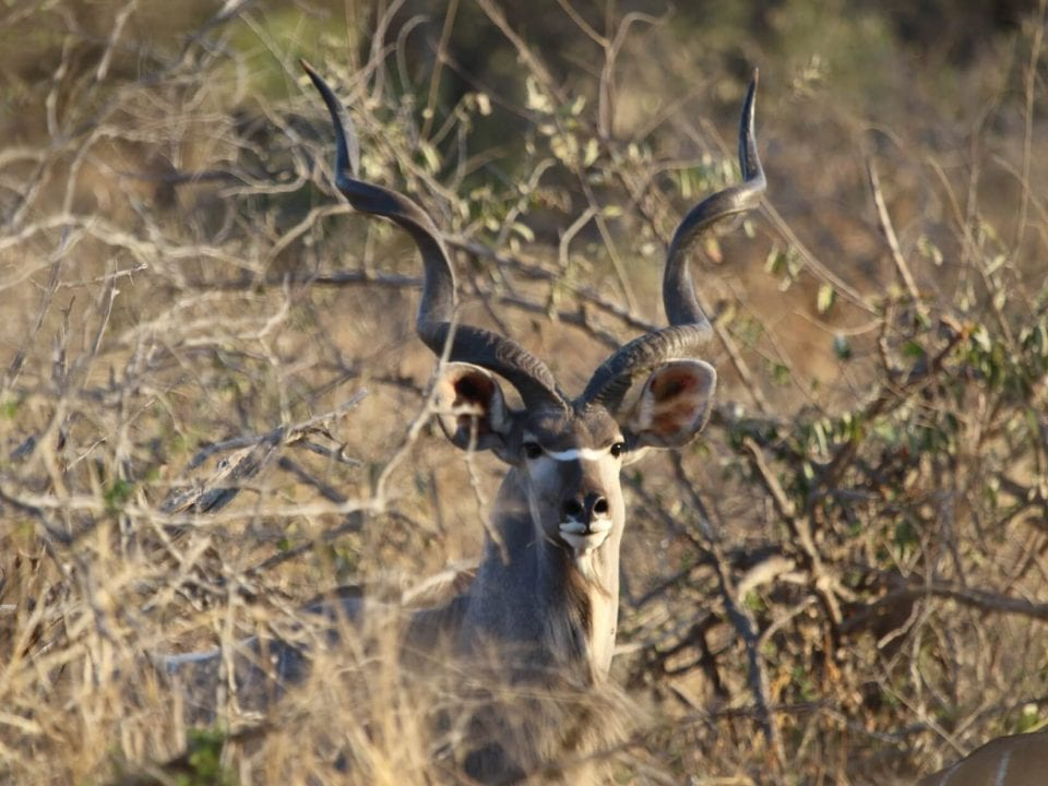 Free Range Kudu Hunting in the Baviaansriver